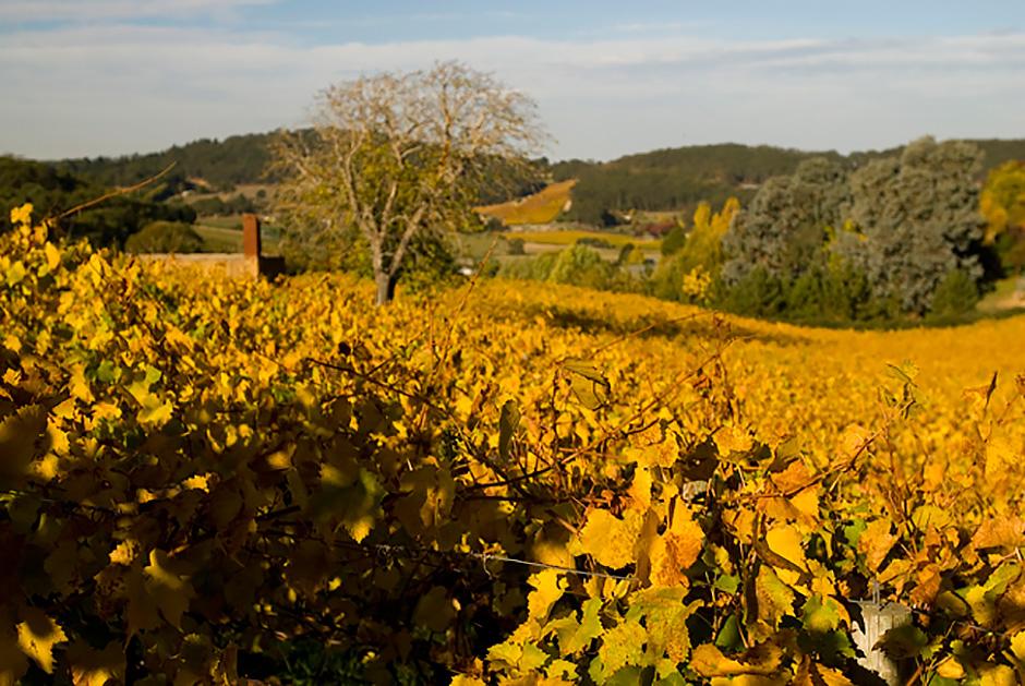 Adelaide hills wine stories south australia for Adelaide hills landscape