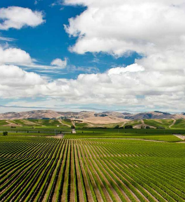 Water resources, viticulture and irrigated crops