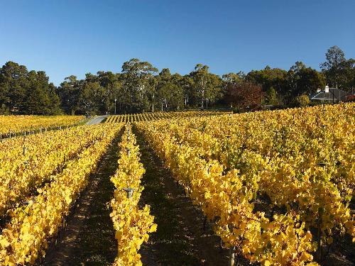 Adelaide Hills Wine | Tapanappa Wines | South Australia.